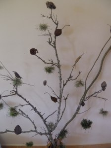 Pájaros 2014 Bolivia